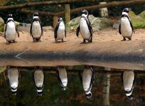 Из-за гололеда травматологи советуют жителям Берлина учиться ходить как пингвины