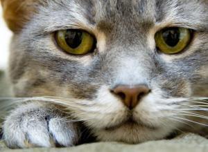 Ученые выяснили, как кошки на самом деле относятся к людям