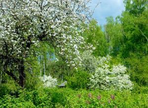 Британские ученые подсчитали число видов деревьев на планете