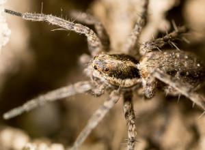 Строитель второй раз за полгода пострадал от укуса паука в детородный орган