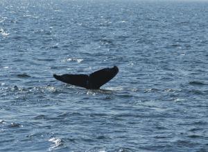 Эколог подружился с китом и отговорил его от самоубийства