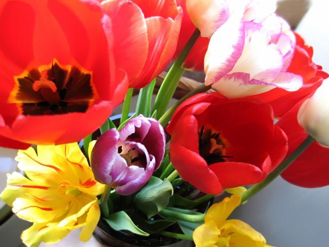 Психологи рассказали, что говорят цветы о том, от кого они