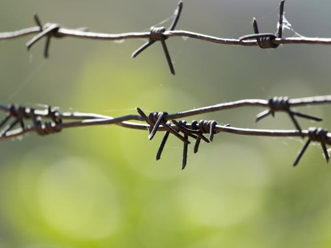 В Германии раскрыта подпольная сеть детской порнографии, насчитывающая 87.000 участников